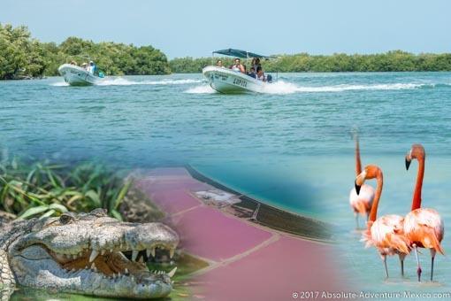 rio-lagartos-las-coloradas-private-tour